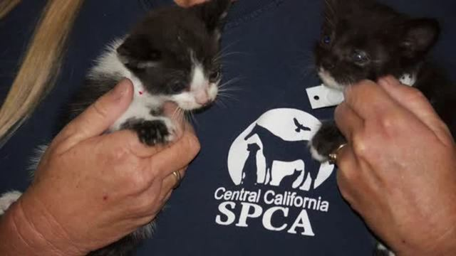 50 cats rescued from hoarding house in Fresno