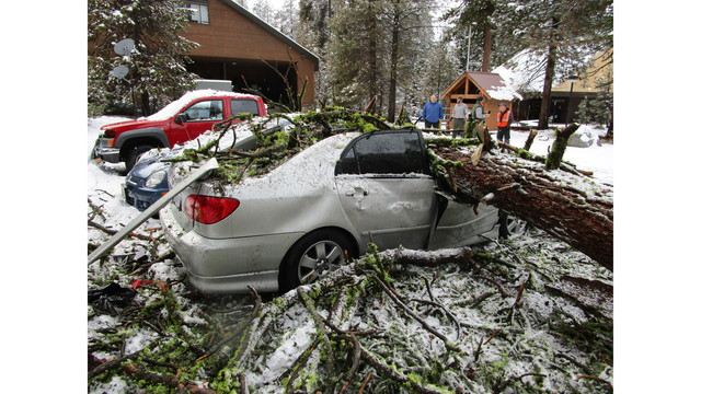 Falling tree smashes cars in Sequoia National Park