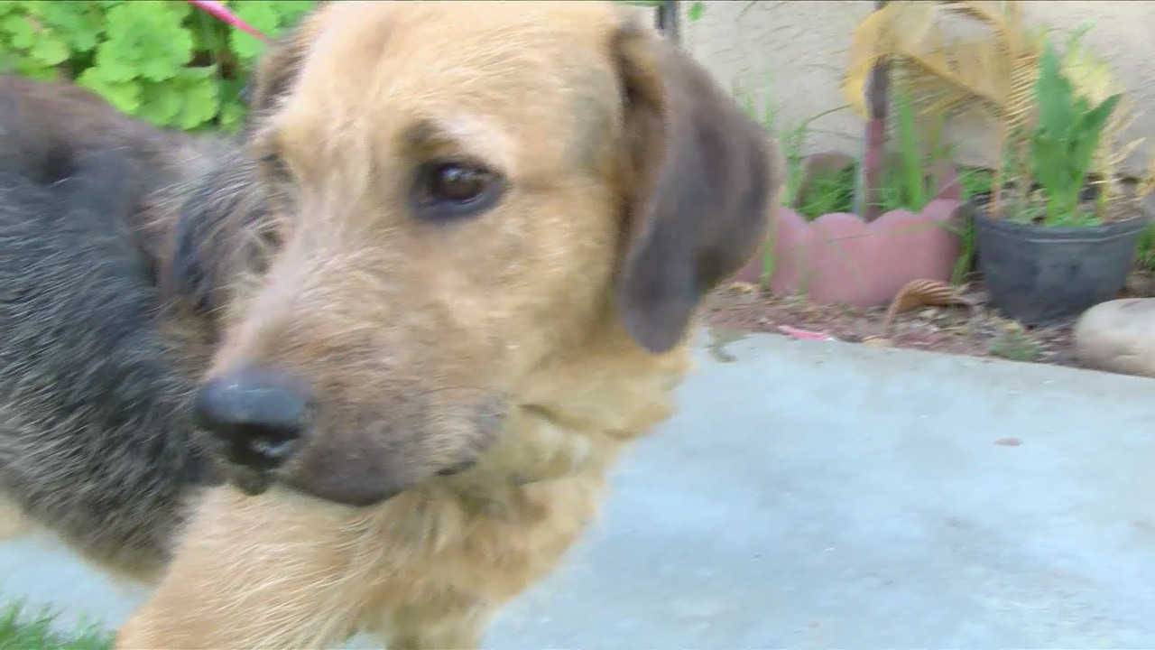 Fresno firefighters save dog from house fire