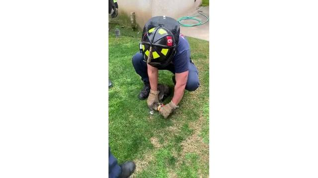 Kitten rescued by Fresno firefighters after getting head stuck in can
